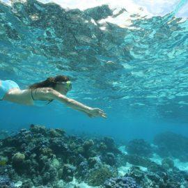 sofitel moorea snorkeling