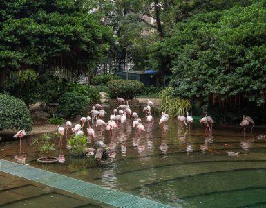 kowloon-park
