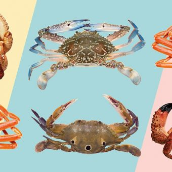 love-crab-international-seafood-dinner-buffet